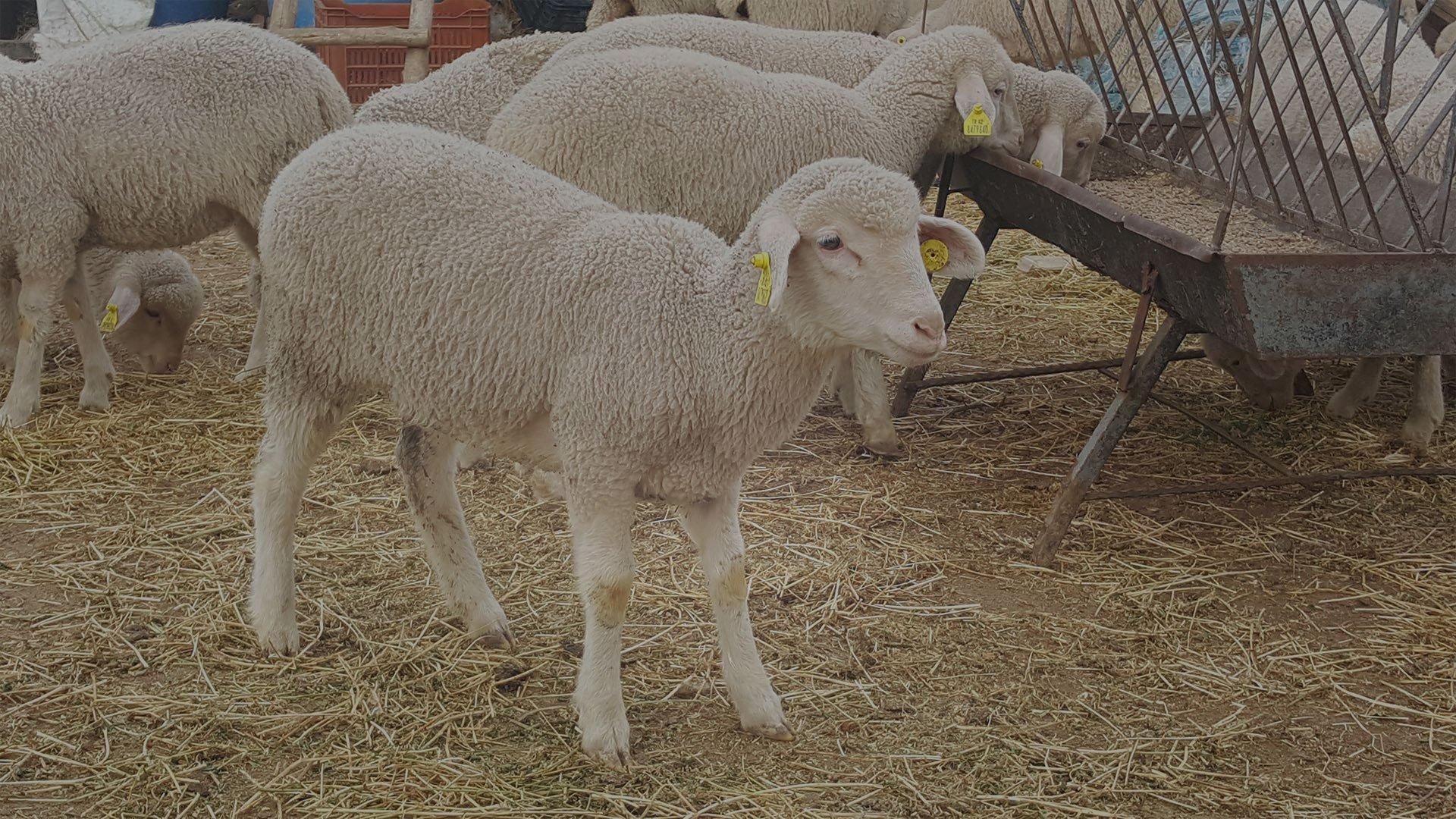 Tarım Hayvancılık