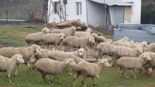 Türkoğlu Tarım Videoları
